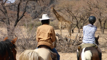 safari-te-paard-in-namibie.jpg