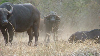 Zuid-Afrika, Big Five